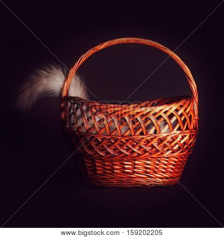 Cute young kitten having fun playing hide and seek The cat hid in a basket sticking out of one tail.