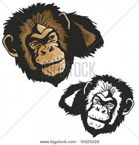 Vector illustration of a monkey.
