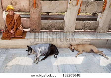 January 29 2014. India. Bodh Gaya. Inhabitants of northern Indian states believing in reincarnation and thinking that it can be their died relatives dress animals in human clothes in hope that him will be warmer.