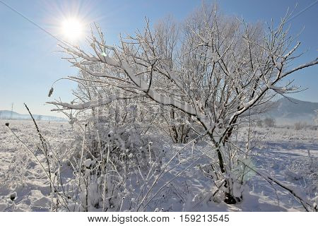 Winter landscape with trees covered with snow