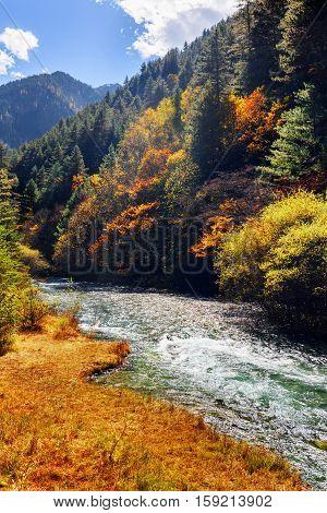 Amazing Mountain River Among Fall Woods. Autumn Landscape