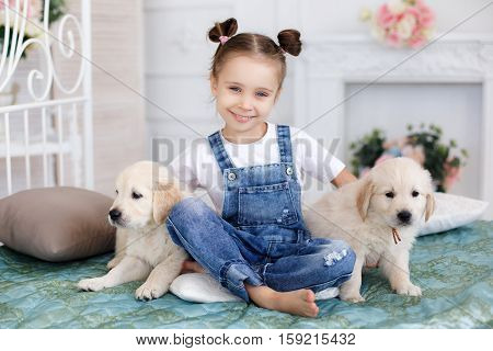 Little girl,brunette hair,tied with pink bands into two tails,dressed in a white t-shirt and blue denim overalls is playing at home,sitting alone on the bed with two puppies breed Golden Retriever