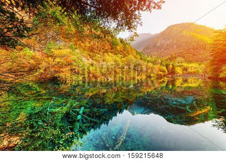 Wonderful View Of The Five Flower Lake Among Scenic Fall Woods