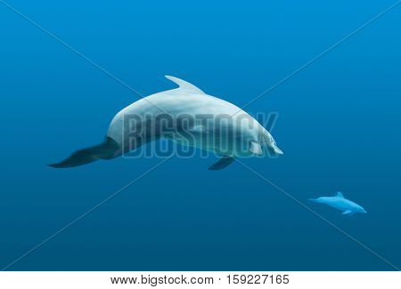 underwater scenery showing two common bottlenose dolphins in blue water ambiance