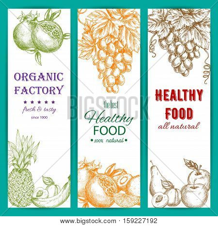 Fruit sketch banners set. Healthy organic fruit food. Vector fresh farm harvest fruits of orange, citrus lemon, grape bunch, pomegranate, apple, apricot, pear, tropical pineapple, banana, kiwi