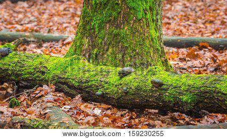 Tree Hub Growing On Trunk