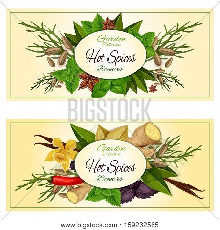 Hot spices and spicy herbs. Vector banners set of cuisine condiments ginger, mint leaves, thyme, vanilla and chili pepper, bay, dill, cumin and basil, oregano and coriander, parsley, cinnamon, cloves, marjoram, tarragon, cilantro rosemary