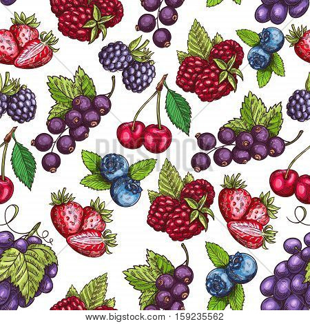 Berries pattern. Vector seamless background of sketch berry grape bunch, strawberry and raspberry, blueberry, blackberry, cherry and blackcurrant
