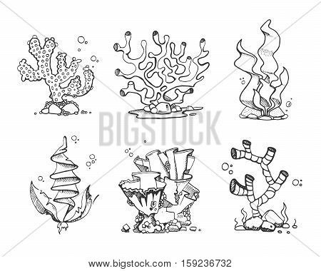 Vintage corals and seaweeds in hand drawn, doodle, sketch style vector set. Seaweeds plant marine, illustration of frame corals