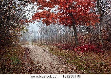 Autumn scenery misty morning. Landscape. Nature. Sadness.