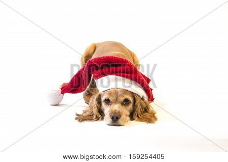A very sweet dog waiting for Christmas