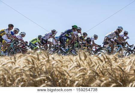 Saint-Quentin-FallavierFrance - July 16 2016: The peloton riding in a wheat plain during the stage 14 of Tour de France 2016.