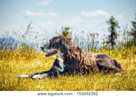 Portrait of a happy dog lying on the grass