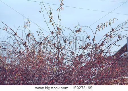 The surreal image of a flock of birds in the autumn branches of a treetop