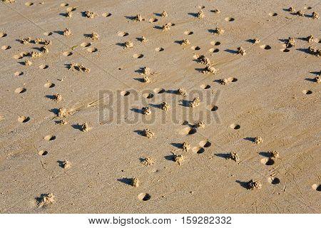 Low tide. Lugworm (arenicola marina) casts on a beach