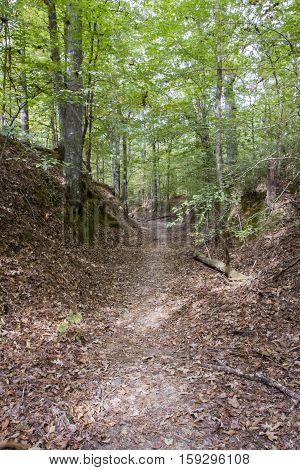 Sunken Old Trace, Natchez Trace Parkway