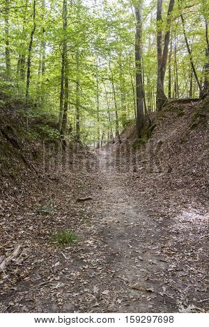 Old Trace, Natchez Trace Parkway
