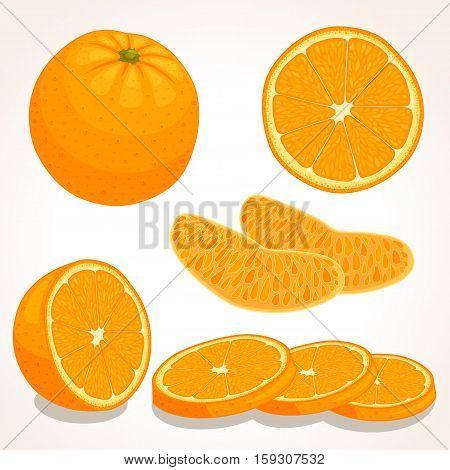 Set of vector orange. Whole sliced half of a orange fruit isolated on white background. Vector illustration.