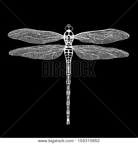 Dragonfly. White dragonfly on black background. Hand drawn vector damselfly.