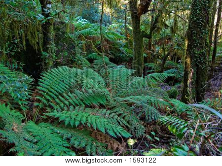 plants and tree ferns in the oxley world heritage rain forest poster