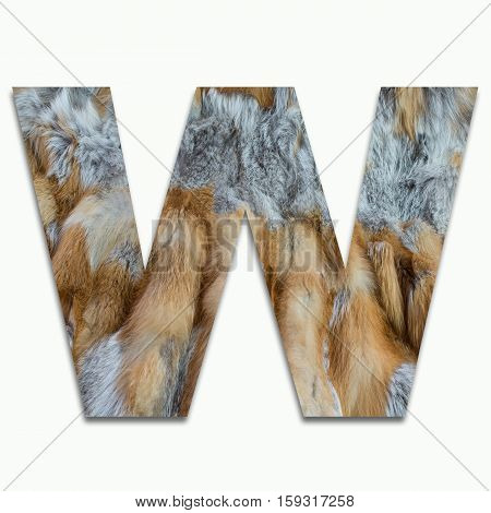 W red fox fur in a font trained