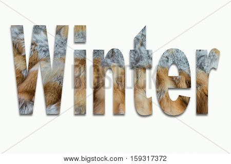 Winter red fox fur in a font trained