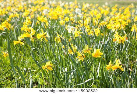 Wallpaper Of Yellow Flowers