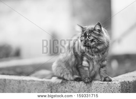 Cat is sitting on a concrete wal