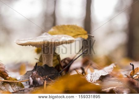 Small mushroom growing in the forest ground.