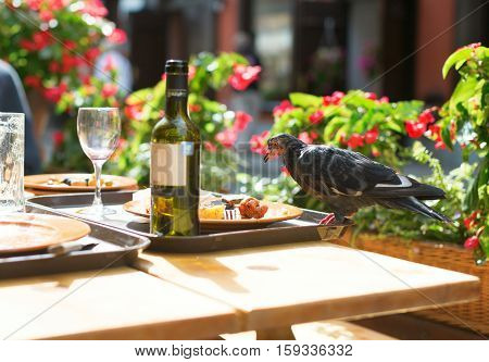Bird On A Table, Eating Leftovers From Plates
