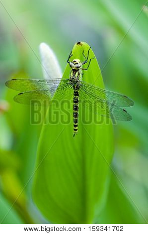 Blue tailed Damselfly on blurred background France