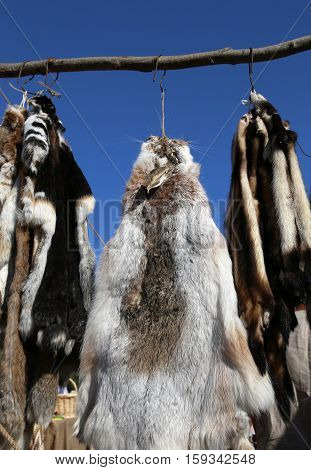 Row of wild animal skins hanging on the market