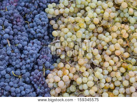 Bunches of black and white grapes lie in a box
