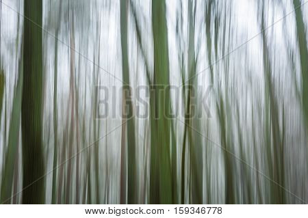 Forest Abstract Blurred Background