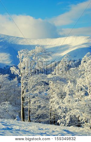 Snow covered trees after a snowstorm in the winter mountains. Clouds float across the blue sky over snowy slopes. Sunny evening after bad weather.