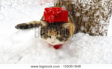Winter day. Cat in red cap. New Years is soon