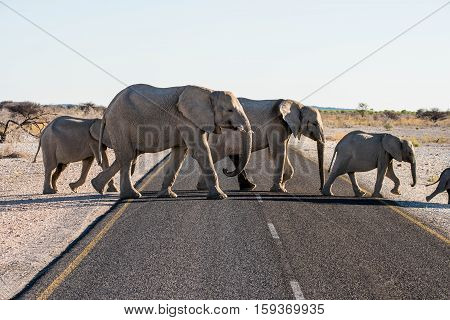 African wildlife at Chobe National Park, Namibia