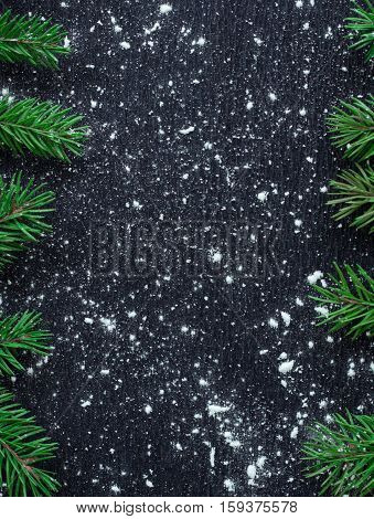 Xmas Tree Branches On Winter Snowbound Black Space Background