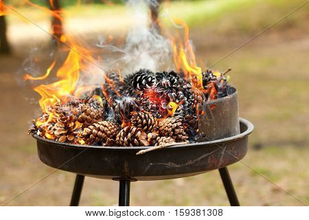 Burning Pine Cones. Preparing Embers For Grilling