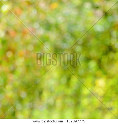 the beautiful abstract blur green nature background