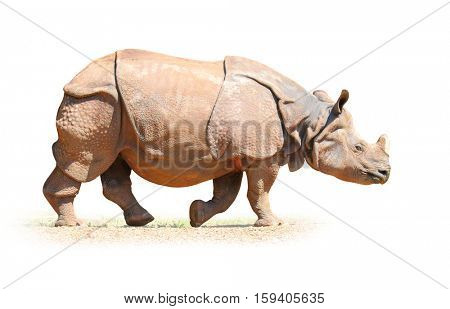 The Indian Rhinoceros (Rhinoceros unicornis). Animals isolated on white background. Object with clipping path.
