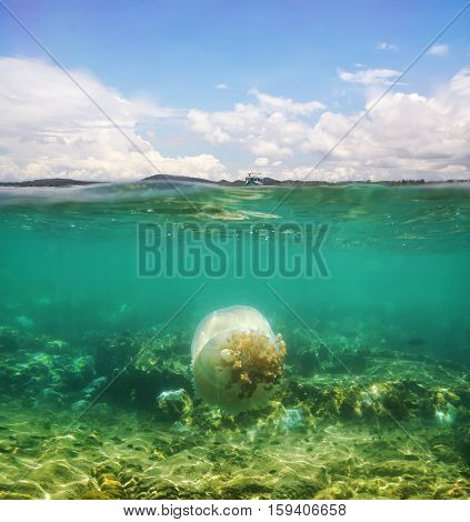 A beautiful underwater seascape with big jellyfish
