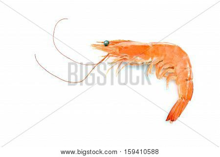 Cooked shrimp prawn isolated on white background