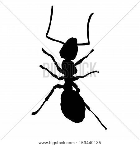 Icon insect ant on a white background. Vector illustration
