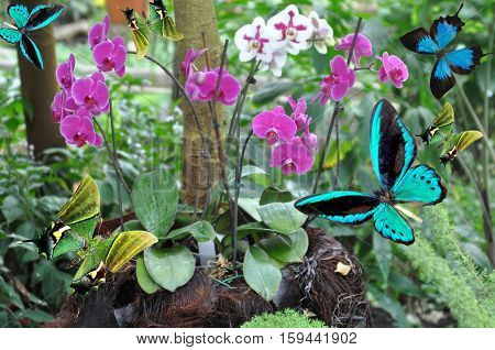 Butterfly And  Orchid