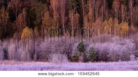 Landscape. Forest and meadow covered with hoarfrost. frosty