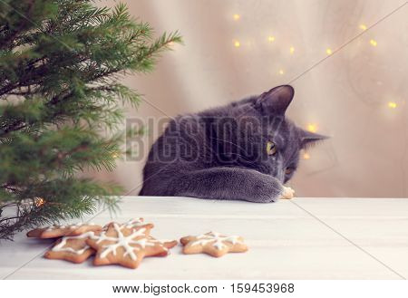 furry cat paw raking delicacy with festive table directly under the Christmas tree / New Year cookie thief