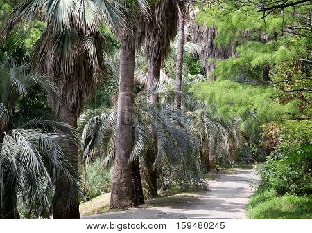 Part of the arboretum with many beautiful tropical plants along the tracks. Palm alley.