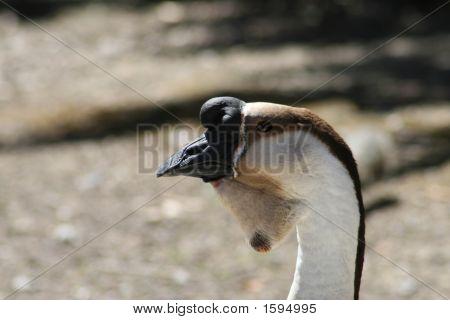 Goose In Profile