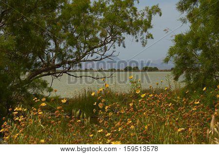 Greece near tigaki beach Kos island flamingo lake